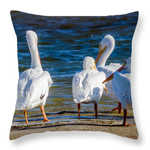 Who Is With Me On This Throw Pillow featuring the photograph Who Is With Me On This? by Debra Martz