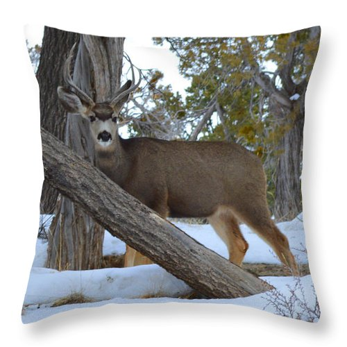 Deer Throw Pillow featuring the photograph Who Me? Oh Deer by Meandering Photography