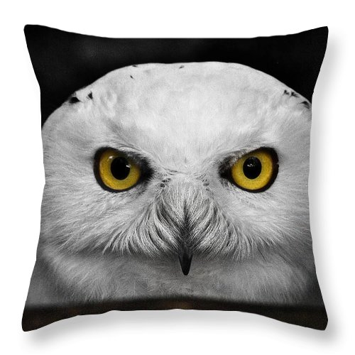 Whoooo's There? Throw Pillow featuring the photograph Whoooo's There? by Wes and Dotty Weber