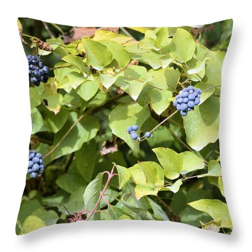 Berries Throw Pillow featuring the photograph Wild Berries by Bonfire Photography