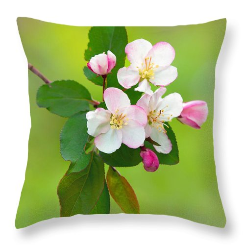 Wild Cherry Throw Pillow featuring the photograph Wild Cherry Blossoms by Carolyn Derstine