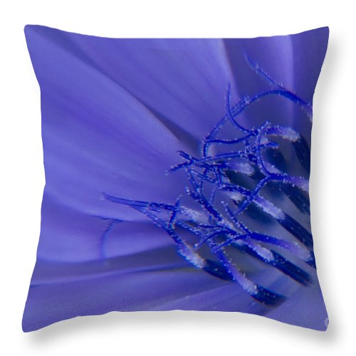 Chicory Throw Pillow featuring the photograph Wild Chicory Macro by Darleen Stry