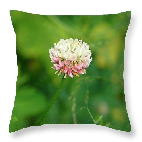 Flower Throw Pillow featuring the photograph Wild Clover by Lew Davis