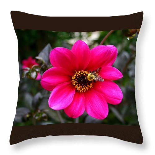 Flower Throw Pillow featuring the photograph Wild Flower by Raleigh Art Gallery