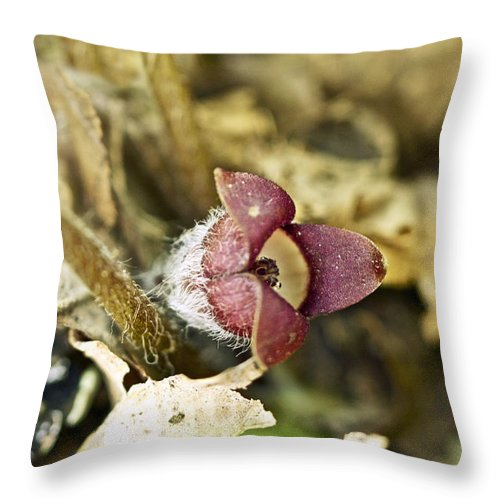 Ginger Throw Pillow featuring the photograph Wild Ginger Wildflower - Asarum Canadense by Mother Nature