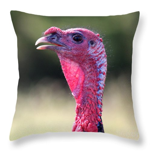 Bird Throw Pillow featuring the photograph Wild Gobbler by Bob and Jan Shriner