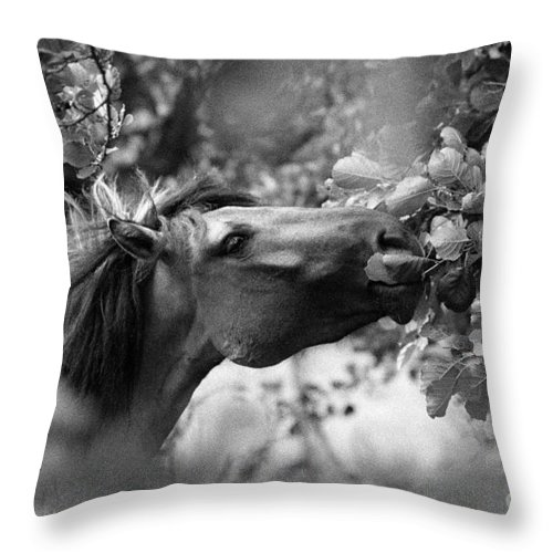 Wild Throw Pillow featuring the photograph Wild Horse In Dunes by Patricia Ramaer