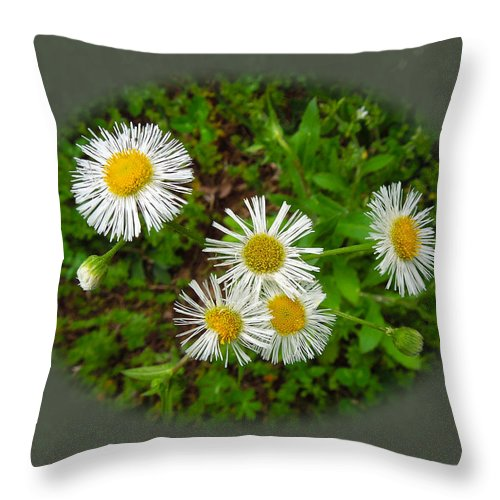 Macro Throw Pillow featuring the photograph Wild Miniature Daisies by Pete Trenholm