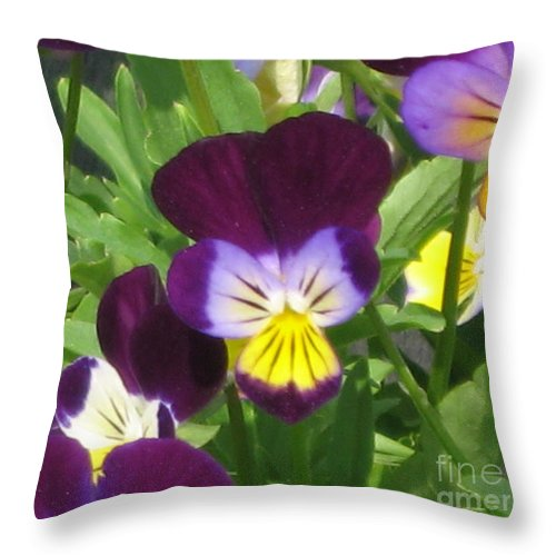 Wild Pansies Throw Pillow featuring the photograph Wild Pansies Or Johnny Jump-ups 1 by Conni Schaftenaar
