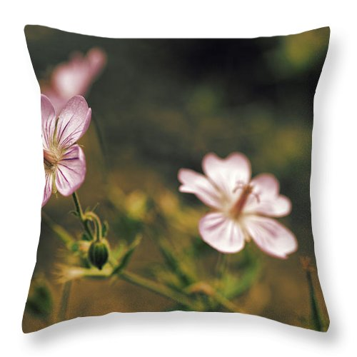 Wildflower Throw Pillow featuring the photograph Wild Pink by J Michael Nettik