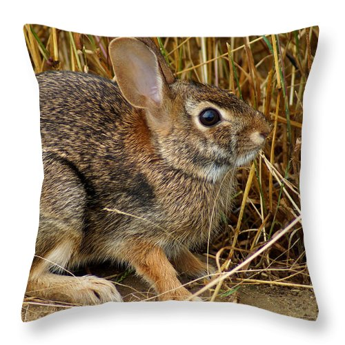 Wild Rabbit Throw Pillow featuring the photograph Wild Rabbit by Kim Pate