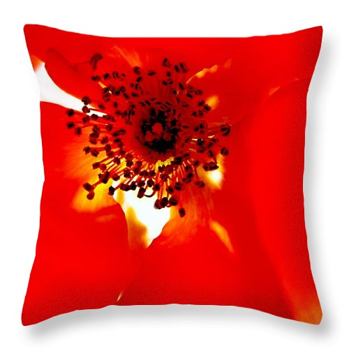 Artiste Danielle Parent Throw Pillow featuring the photograph Wild Red Rose Extrem Macro by Danielle Parent