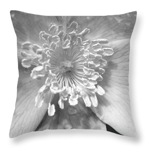 #albertarose Throw Pillow featuring the photograph Wild Rose by Jacquelinemari