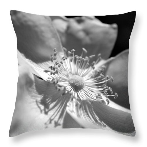 Roses Throw Pillow featuring the photograph Wild Rose by Kelly Nowak