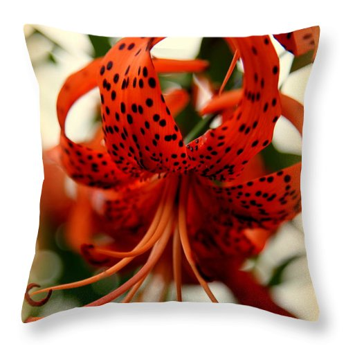 Smokey Mountain Wildflowers Throw Pillow featuring the photograph Wild Smokies Lily by Karen Wiles