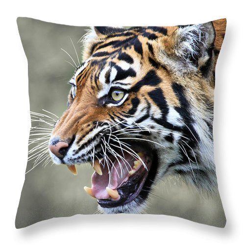 Tiger Throw Pillow featuring the photograph Wildcat II by Athena Mckinzie