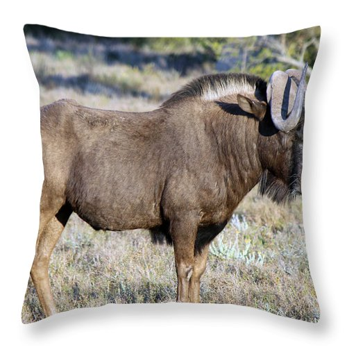 Wildebeest Throw Pillow featuring the photograph Wildebeest by Chris Whittle