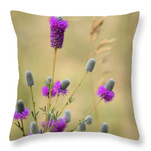 Purple Throw Pillow featuring the photograph Wildflower 8319 by Bonfire Photography
