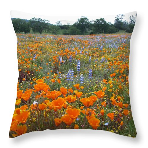 Wildflowers Throw Pillow featuring the photograph Wildflower Wonderland by Lynn Bauer