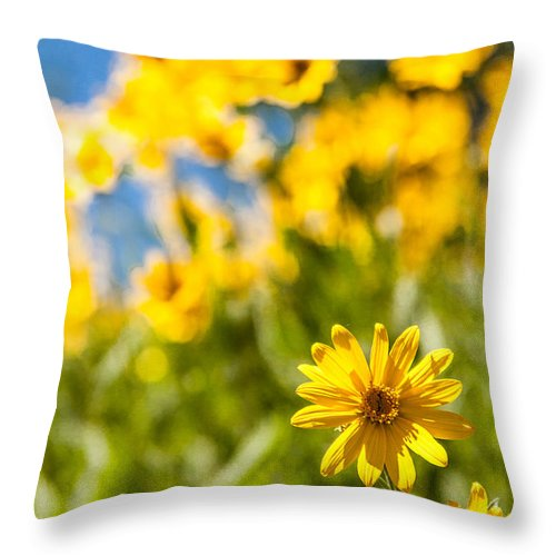 Flowers Throw Pillow featuring the photograph Wildflowers Standing Out Abstract by Chad Dutson