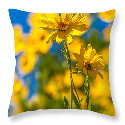 Flowers Throw Pillow featuring the photograph Wildflowers Standing Out by Chad Dutson