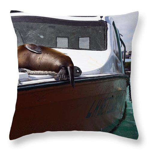 Galapagos Sea Lion Asleep On Boat Deck Throw Pillow featuring the photograph Will Sleep Anywhere by Sally Weigand