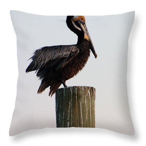 Brown Pelican Throw Pillow featuring the photograph Will This Pose Do by Suzanne Gaff