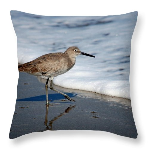 Sandpiper Throw Pillow featuring the photograph Willet 002 by Larry Ward