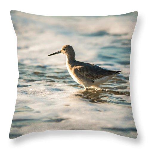 Avian Throw Pillow featuring the photograph Willet Wading Through The Ocean Foam by Alex Grichenko