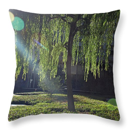 Willow Throw Pillow featuring the photograph Willow Magic by Suzanne Gaff