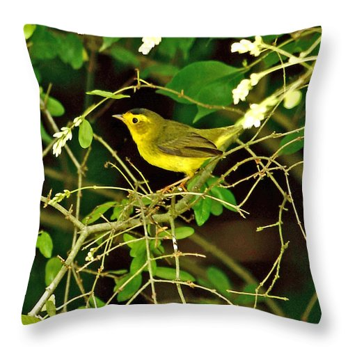 Wilson's Warbler Throw Pillow featuring the photograph Wilson's Warbler by PJQandFriends Photography