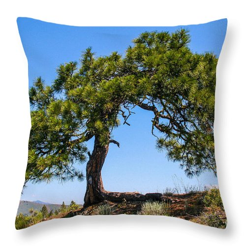 Pine Throw Pillow featuring the photograph Lonesome Pine Tree by SnapHound Photography