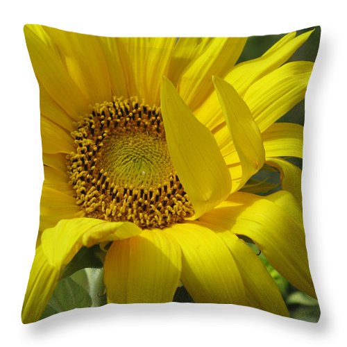 Sunflower Throw Pillow featuring the photograph Windblown Sunflower One by Barbara McDevitt