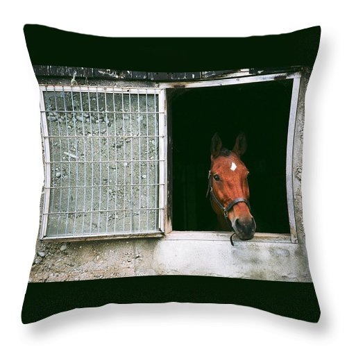 Horse Throw Pillow featuring the photograph Window View by David Porteus