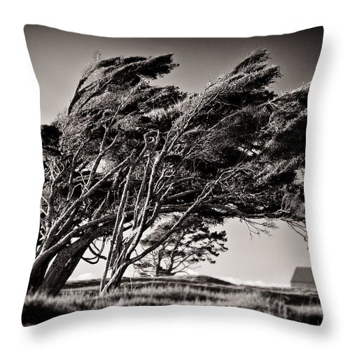 Windswept Trees Throw Pillow featuring the photograph Windswept by Dave Bowman