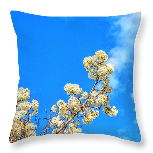 Hdr Throw Pillow featuring the photograph Winter Beauty Hdr by Janna and Kirk Davis
