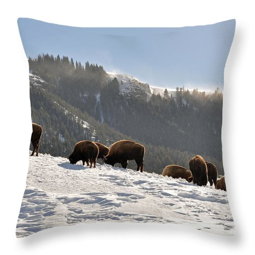 Bison Throw Pillow featuring the photograph Winter Bison Herd In Yellowstone by Bruce Gourley
