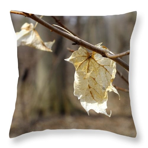 Nature Throw Pillow featuring the photograph Winter Bleached Leaves by Peggy King