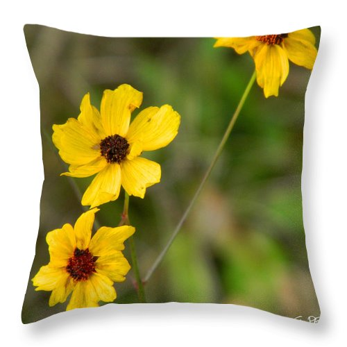 Winter Throw Pillow featuring the photograph Winter Bloom by George Pedro