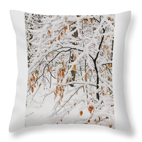Winter Throw Pillow featuring the photograph Winter Branches by Ann Horn