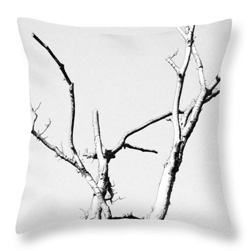 Branch Throw Pillow featuring the photograph Winter Branches by Maggy Marsh