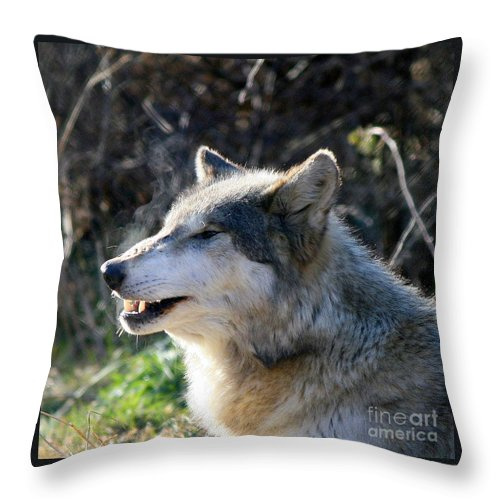 Wolf Throw Pillow featuring the photograph Winter Breathing by Neal Eslinger