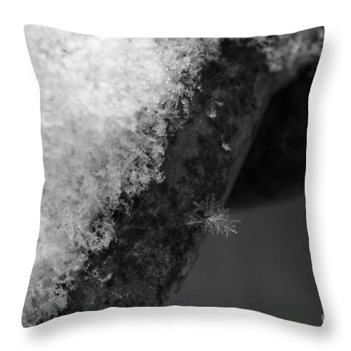 Winter Snow Flake Throw Pillow featuring the photograph Winter Coat Black And White by Michael Mooney
