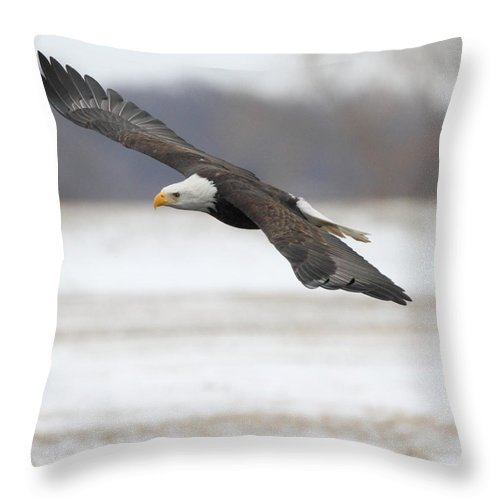 American Bald Eagle Throw Pillow featuring the photograph Winter Eagle by Coby Cooper