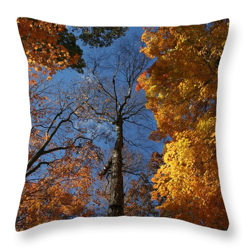 Autumn Throw Pillow featuring the photograph Winter Is Coming by William Selander