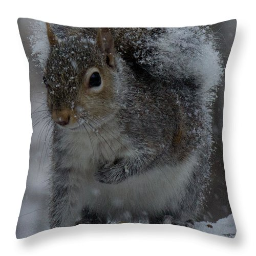 Sandra Clark Throw Pillow featuring the photograph Winter Squirrel 1 by Sandra Clark
