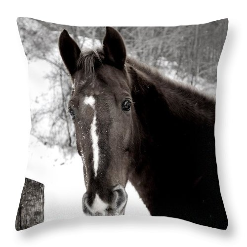 Equine Throw Pillow featuring the photograph Winter Stance by Chastity Hoff