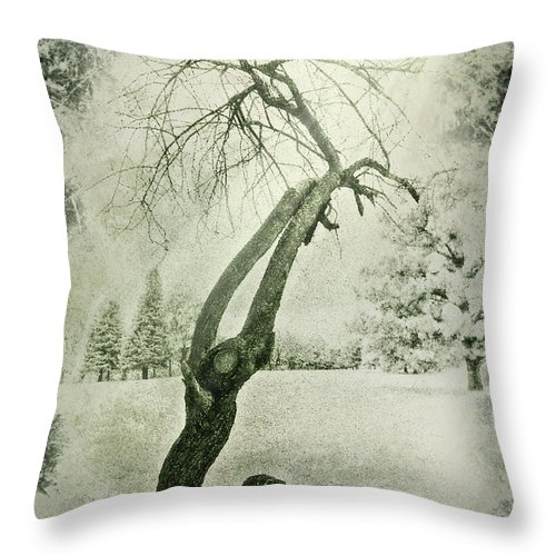 Trees Throw Pillow featuring the photograph Winter Survivor by John Anderson