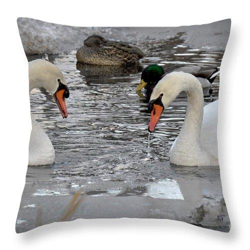Swan Throw Pillow featuring the photograph Winter Swans by Gary Keesler