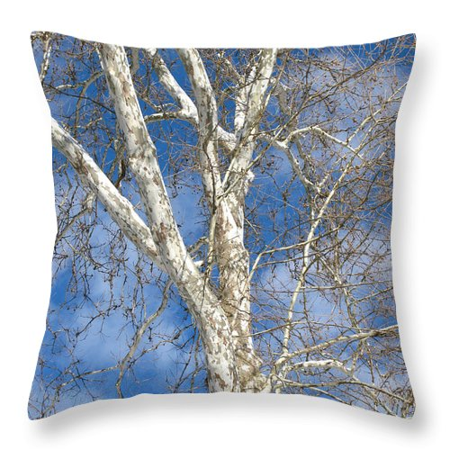 Winter Throw Pillow featuring the photograph Winter Sycamore by Ann Horn